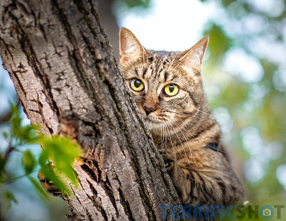 pet_photography_cats_outdoor