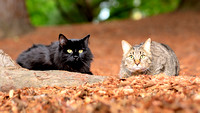 pet_photography_cats_together