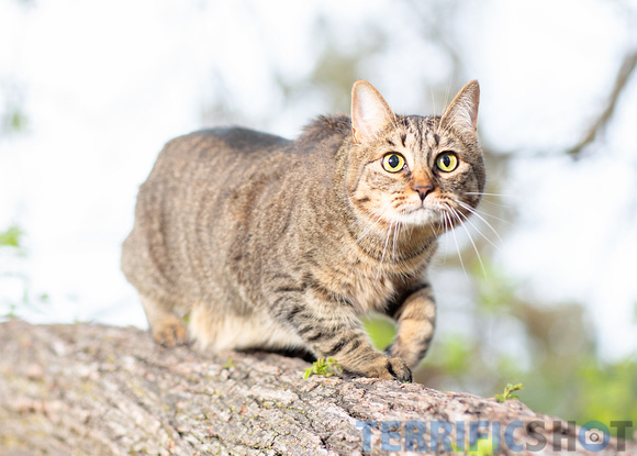 cat_on_a_tree_branch_photography_pet